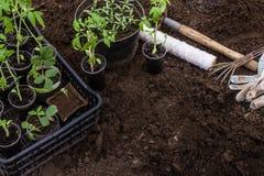 Jeunes plantes au printemps pour la plantation photo libre de droits