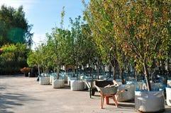 Jeunes plantes d'Apple dans de grands sacs à une vente de jardin Arbres fruitiers pour planter dans la terre images stock