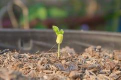 Jeunes plantes d'arbre Photographie stock