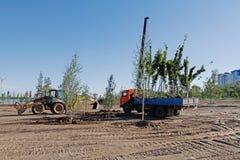 Jeunes plantes d'arbre dans un camion prêt pour planter en parc de ville à Volgograd photographie stock libre de droits