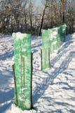 Jeunes plantes d'arbre protégées avec la maille verte Photo libre de droits