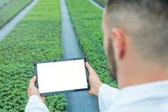 Jeunes plantes d'usine élevant le ressort de serre chaude biotechnologie Photographie stock