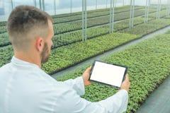 Jeunes plantes d'usine élevant le ressort de serre chaude Enginee de biotechnologie Images libres de droits