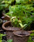 Jeunes plantes dans des pots biodégradables image stock