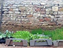 Jeunes plantes dans des récipients le long d'un mur en pierre Photos libres de droits