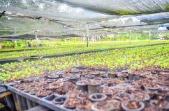 Jeunes plantes dans la cr?che photos stock