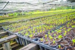 Jeunes plantes dans la cr?che photos libres de droits