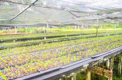Jeunes plantes dans la cr?che photo libre de droits