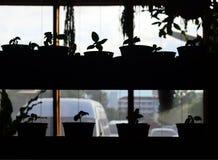 Jeunes plantes dans le pot, jeune usine dans le pot Photos stock
