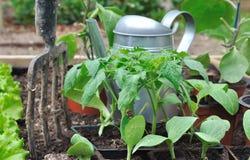 Jeunes plantes dans le potager Photographie stock