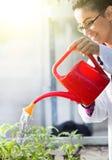Jeunes plantes de arrosage de biologiste en serre chaude photos stock