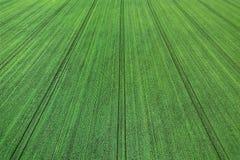 Jeunes jeunes plantes de blé s'élevant dans une vue aérienne de champ Photographie stock