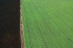Jeunes jeunes plantes de blé s'élevant dans une vue aérienne de champ Photos stock