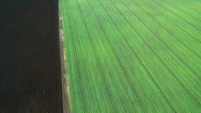 Jeunes jeunes plantes de blé s'élevant dans une vue aérienne de champ Photographie stock libre de droits