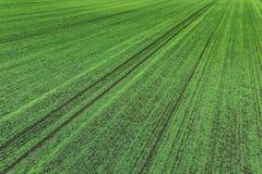 Jeunes jeunes plantes de blé s'élevant dans une vue aérienne de champ Photo stock