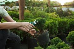 Jeunes plantes de coupe dans un pot image stock