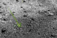 Jeunes plantes de la terre Images libres de droits