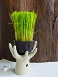 Jeunes plantes de riz Photo stock