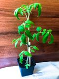 Jeunes plantes de tomate image stock