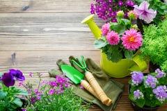 Jeunes plantes des plantes et des fleurs de jardin dans des pots de fleurs Équipement de jardin Vue supérieure images libres de droits