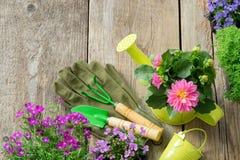 Jeunes plantes des fleurs de jardin dans des pots de fleurs Équipement de jardin : boîte d'arrosage, seau, pelle, râteau, gants image stock