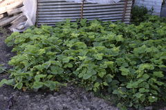 Jeunes plantes en serre chaude Élevage des légumes en serres chaudes Photographie stock libre de droits