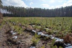 Jeunes plantes et vieille forêt Images stock