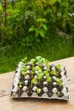 Jeunes plantes nouveau-nées Photo stock