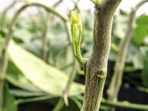 Jeunes plantes oranges Images libres de droits