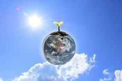 Jeunes jeunes plantes plantées sur la terre de globe avec le ciel bleu clair Image libre de droits