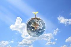 Jeunes jeunes plantes plantées sur la terre de globe avec le ciel bleu clair Photographie stock libre de droits