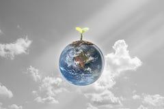 Jeunes jeunes plantes plantées sur la terre de globe avec le ciel et le nuage b Images libres de droits