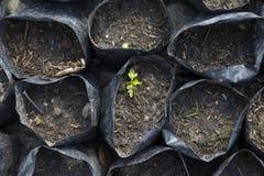 Jeunes plantes portées Photographie stock libre de droits