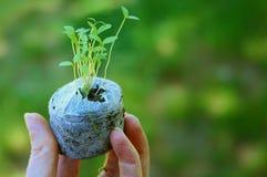 Jeunes plantes poussées Photographie stock libre de droits