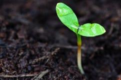 Jeunes plantes s'élevant en serre chaude Images stock