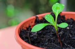 Jeunes plantes s'élevant en serre chaude Photographie stock