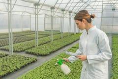 Jeunes jeunes plantes s'élevant en serre chaude Arrosage de jeune femme Photo stock