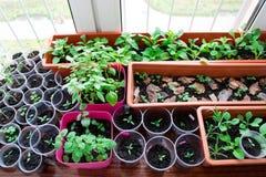 Jeunes plantes sur un rebord de fenêtre image stock