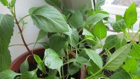Jeunes plantes vertes dans des pots photo libre de droits