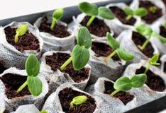 Jeunes plantes vertes fraîches Photos stock