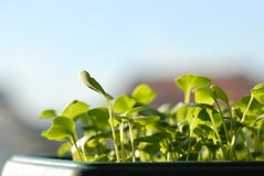 Jeunes plantes vertes sur la lumière du soleil Images libres de droits