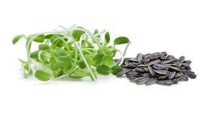 Jeunes pousses de tournesol et graines de tournesol vertes Photographie stock libre de droits