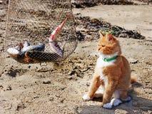 Jeunes ragondin et poissons rouges du Maine. Images stock