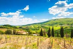 Jeunes vignobles en Toscane, Italie Images libres de droits