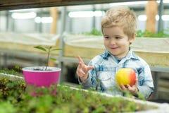 jeunesse concept de la jeunesse saine avec le bon avenir jeunesse face à la pomme fraîche de prise heureuse de petit garçon en se images libres de droits