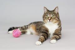 Jeux aux yeux verts tigrés de chat avec la boule Images stock