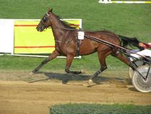Jeux de cavalier de Ljubicevo Photo stock