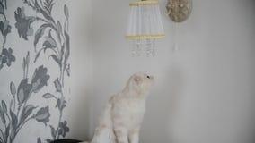 jeux de chaton avec les lampes de pendants en cristal banque de vidéos