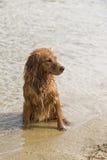 Jeux de chien sur la plage Photographie stock libre de droits