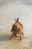 Jeux de chien sur la plage Images libres de droits